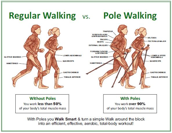 Nordic Walking Muscles Used